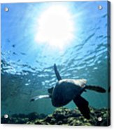 Turtles View Acrylic Print