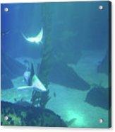 Underwater Blue Background Acrylic Print