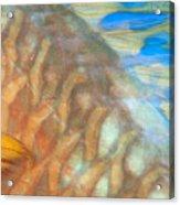 Underwater Close-up Acrylic Print