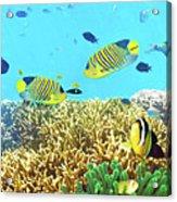 Underwater Panorama Acrylic Print