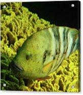 Underwater Photography Acrylic Print