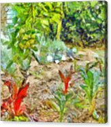 Vegetable Garden Acrylic Print