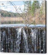 Vermont Swamp Acrylic Print