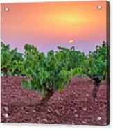 Vineyards At Pink Sunset Acrylic Print