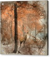 Watercolour Painting Of Beautiful Image Of Red Deer Stag In Fogg Acrylic Print