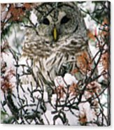 What A Hoot Acrylic Print