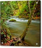 Whatcom Creek Acrylic Print by Idaho Scenic Images Linda Lantzy