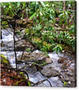 White Oak Run In Spring Acrylic Print by Thomas R Fletcher