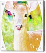 White-tailed Virginia Deer Fawn Acrylic Print