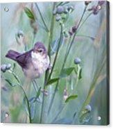 Wild Bird In A Natural Habitat Acrylic Print