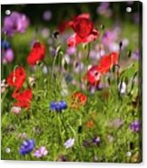 Wild Flowers And Red Poppies Acrylic Print