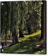 Willows And Oaks Acrylic Print