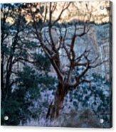Winter At Grand Canyon Acrylic Print