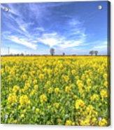 Yellow Fields Of Summer Acrylic Print