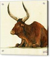 Zebu Cattle Art Painting Acrylic Print