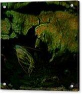 20 000 Leagues Under The Sea Acrylic Print