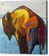 Twenty Below - Bison Acrylic Print