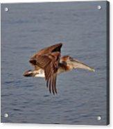 20- Pelican Acrylic Print