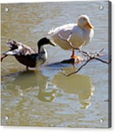 2002-ducks Acrylic Print