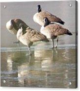 2004-geese On Ice Acrylic Print