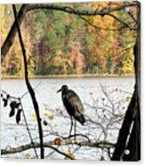 2006-heron Fall2009 Acrylic Print