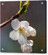 2008 Springtime  6365  Acrylic Print
