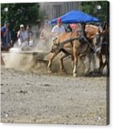 2009 Horse Pull Team A Acrylic Print