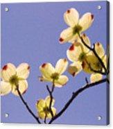 2009 Springtime  6399  Acrylic Print