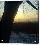 20090322 36 In Shadow Of Tree Before Sunset Acrylic Print