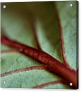 2010 Hydrangea Leaf Close Up 1 Acrylic Print