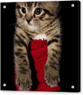 2010 Stocking Cat 2 Acrylic Print