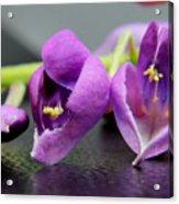 2010 Wisteria Blossom Up Close 1 Acrylic Print