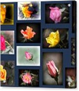 2014-03-16 - Rose Acrylic Print