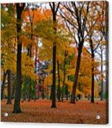 2015 Fall Colors - Washington Crossing State Park-1 Acrylic Print