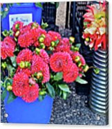 2016 Monona Farmer's Market Blue Bucket Of Dahlias Acrylic Print