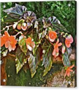 2017 Early August At The Gardens Visiting An Old Friend Acrylic Print