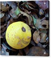 2017 Limone Acrylic Print