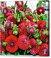 2017 Monona Farmers' Market August Dahlias 1 Acrylic Print