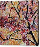 201727 Cherry Blossoms Acrylic Print