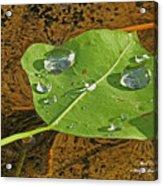 2018 08 31 Sign  H2o Leaf Img_5999 Acrylic Print