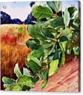 #203 Blue Oak Leaves 2 Acrylic Print