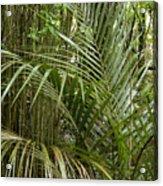 Jungle 97 Acrylic Print