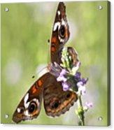 2065 - Butterfly Acrylic Print