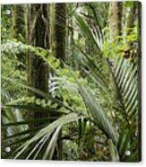Jungle 99 Acrylic Print