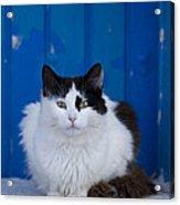 Cat On A Greek Island Acrylic Print