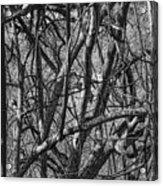 Msc Acrylic Print