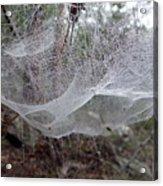 Australia - Concave Spider Web Acrylic Print