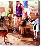#258 Rruff Dog Park Acrylic Print