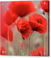 Summer Poppy Meadow Acrylic Print