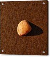 Beach Shell Acrylic Print